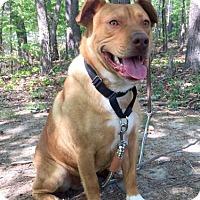 Adopt A Pet :: Rocky - Spring Valley, NY