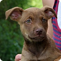 Adopt A Pet :: Jelly Bean - Glastonbury, CT