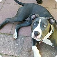 Adopt A Pet :: Daisy - Wilmington, DE