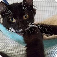 Adopt A Pet :: Michael - Umatilla, FL