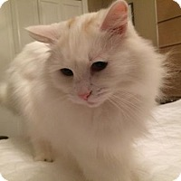 Adopt A Pet :: Offered by Owner 'Scottie' - HILLSBORO, OR