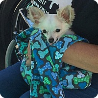 Adopt A Pet :: Jelly Bean - Fountain Valley, CA