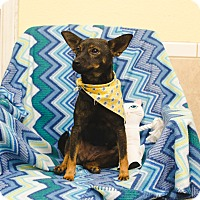 Adopt A Pet :: SALLY - Poteau, OK