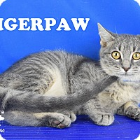 Adopt A Pet :: TigerPaw - Carencro, LA