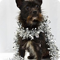 Adopt A Pet :: Smokey - Rosalia, KS