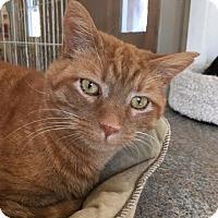 Adopt A Pet :: Oscar - Cashiers, NC