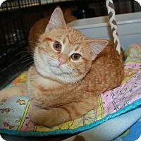 Adopt A Pet :: Rudy - Rochester, MN
