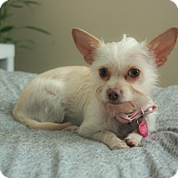 Adopt A Pet :: Willow - Fountain Valley, CA