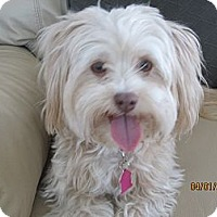Adopt A Pet :: Sunny - Culver City, CA