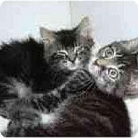 Adopt A Pet :: Peyton & Piper - Arlington, VA
