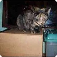 Adopt A Pet :: Gabby - Hamburg, NY