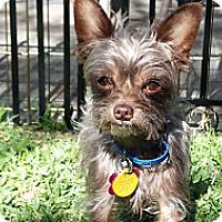 Adopt A Pet :: Koby - San Dimas, CA