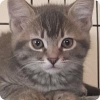 Adopt A Pet :: Kacie - Irvine, CA