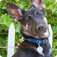 Adopt A Pet :: Carla - Thousand Oaks, CA