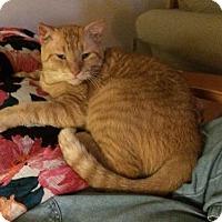 Adopt A Pet :: Red - Melbourne, FL