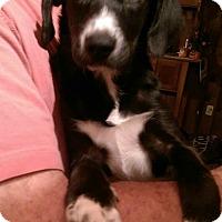 Adopt A Pet :: Emma - Charlestown, RI