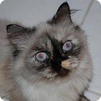 Adopt A Pet :: Roxie - La Jolla, CA