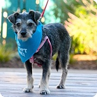 Adopt A Pet :: Clarabelle - Pacific Grove, CA