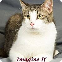 Adopt A Pet :: Belmont - Edmond, OK