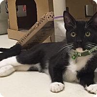 Adopt A Pet :: Cosmo - Colorado Springs, CO