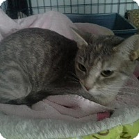 Adopt A Pet :: Holly - Columbus, OH