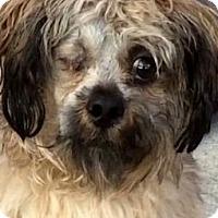 Adopt A Pet :: WATSON (video) - Los Angeles, CA
