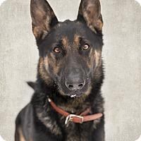 Adopt A Pet :: Rhett - Winnipeg, MB