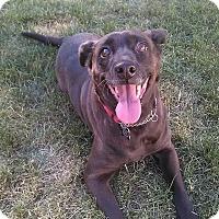 Adopt A Pet :: Bindi - Eastpointe, MI