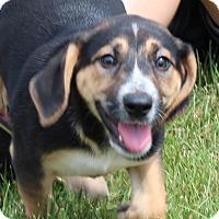 Adopt A Pet :: ROMANO - Harmony, Glocester, RI