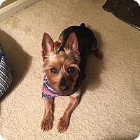 Adopt A Pet :: Cash - Lorain, OH