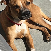 Adopt A Pet :: Charlie - Richmond, CA