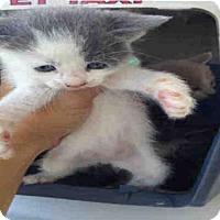 Adopt A Pet :: NUMBER 4 - Bakersfield, CA