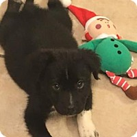 Adopt A Pet :: Legend - Columbia, SC