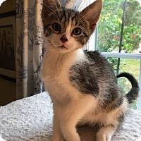Adopt A Pet :: Vaughn - Wayne, NJ