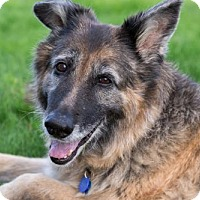 German Shepherd Dog Mix Dog for adoption in Bainbridge Island, Washington - KORA - loving playful girl