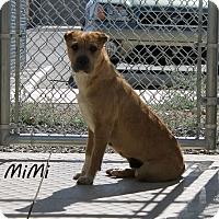 Adopt A Pet :: Mimi - Edgewood, NM