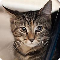 Adopt A Pet :: Camilo - Alexandria, VA