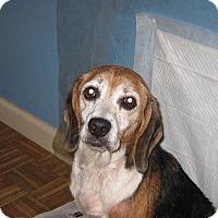 Adopt A Pet :: Tilly - Plainfield, CT