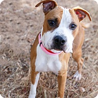 Adopt A Pet :: Kingston - Marietta, GA