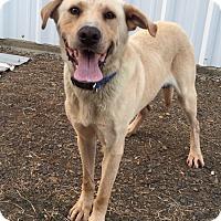Adopt A Pet :: Titus meet me 12/16 - Manchester, CT