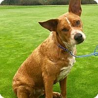 Adopt A Pet :: RAIDER - pasadena, CA