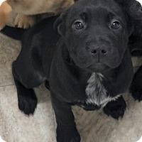 Adopt A Pet :: Indiana - Snow Hill, NC