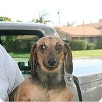 Adopt A Pet :: Chiquis - Garden Grove, CA