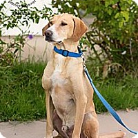 Adopt A Pet :: MONTE - Phoenix, AZ
