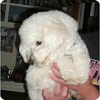 Adopt A Pet :: Dylan - La Costa, CA