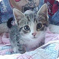 Adopt A Pet :: Becca - Germansville, PA