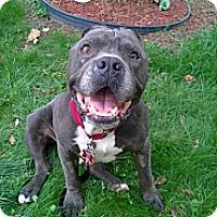 Adopt A Pet :: Creature - Winchester, VA