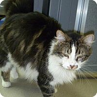 Adopt A Pet :: Lenny - Hamburg, NY