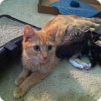 Adopt A Pet :: Litter of 6 - Fairborn, OH