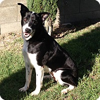 Adopt A Pet :: ADDY - San Pedro, CA